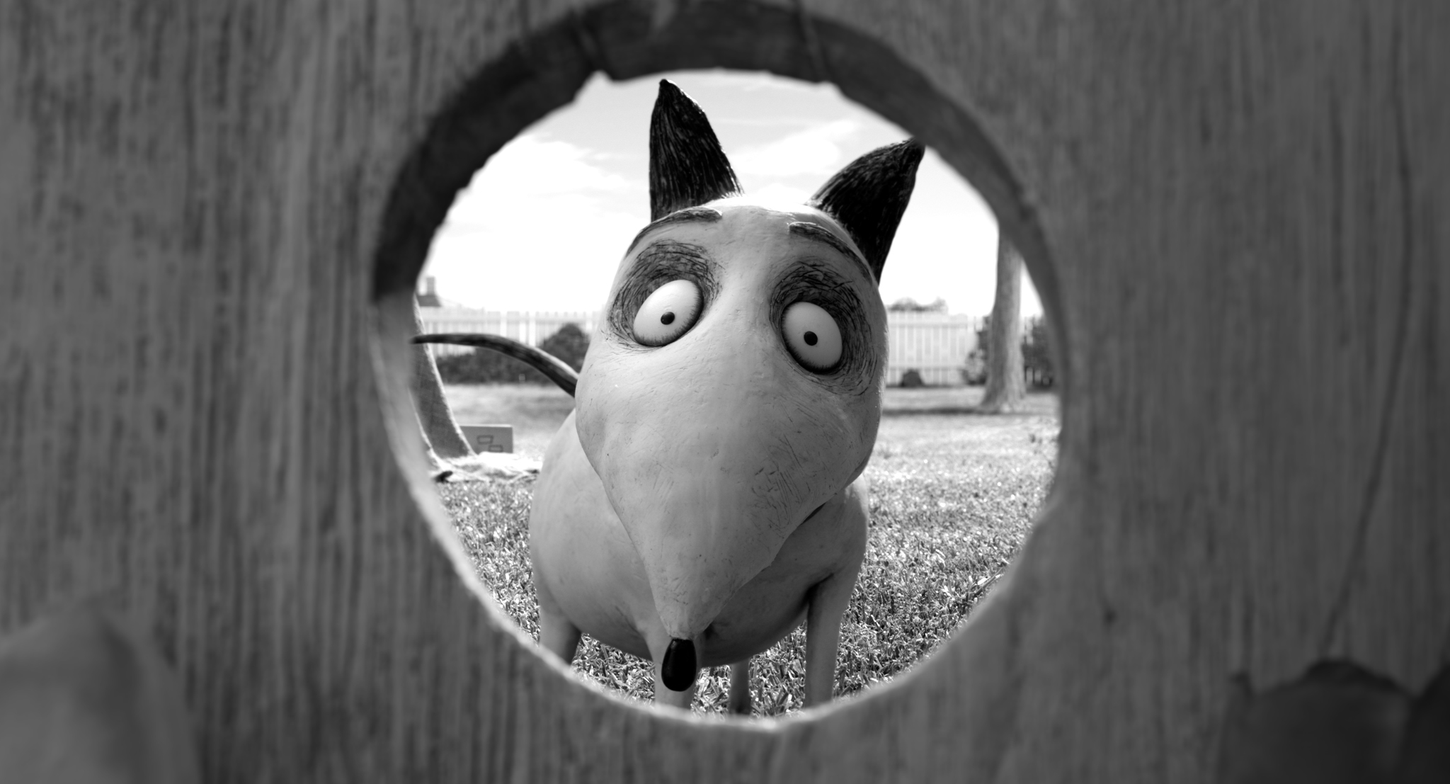Frankenweenie Wallpapers Movie Hq Frankenweenie Pictures 4k Wallpapers 2019