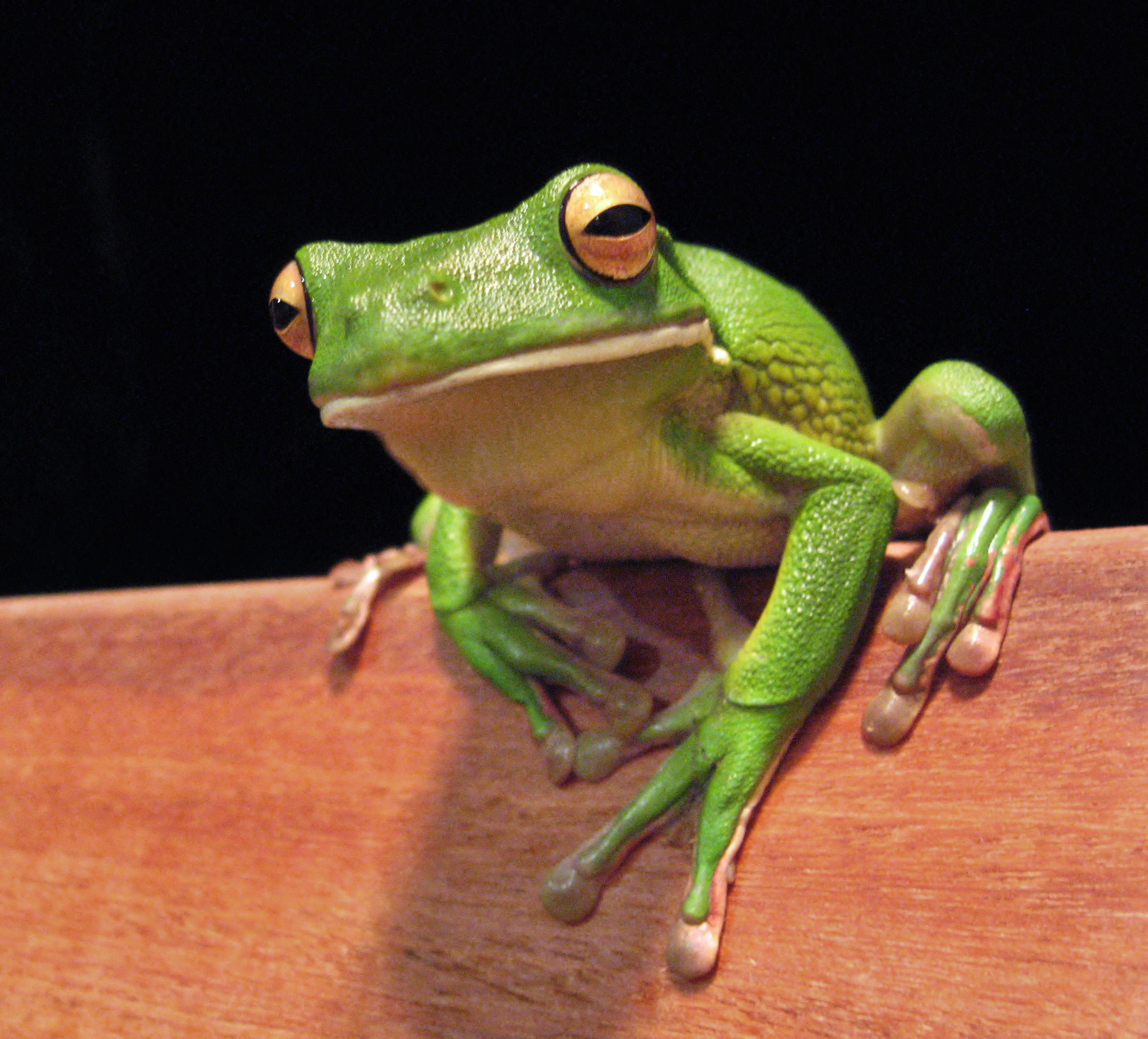 Frog Backgrounds, Compatible - PC, Mobile, Gadgets| 2400x2172 px