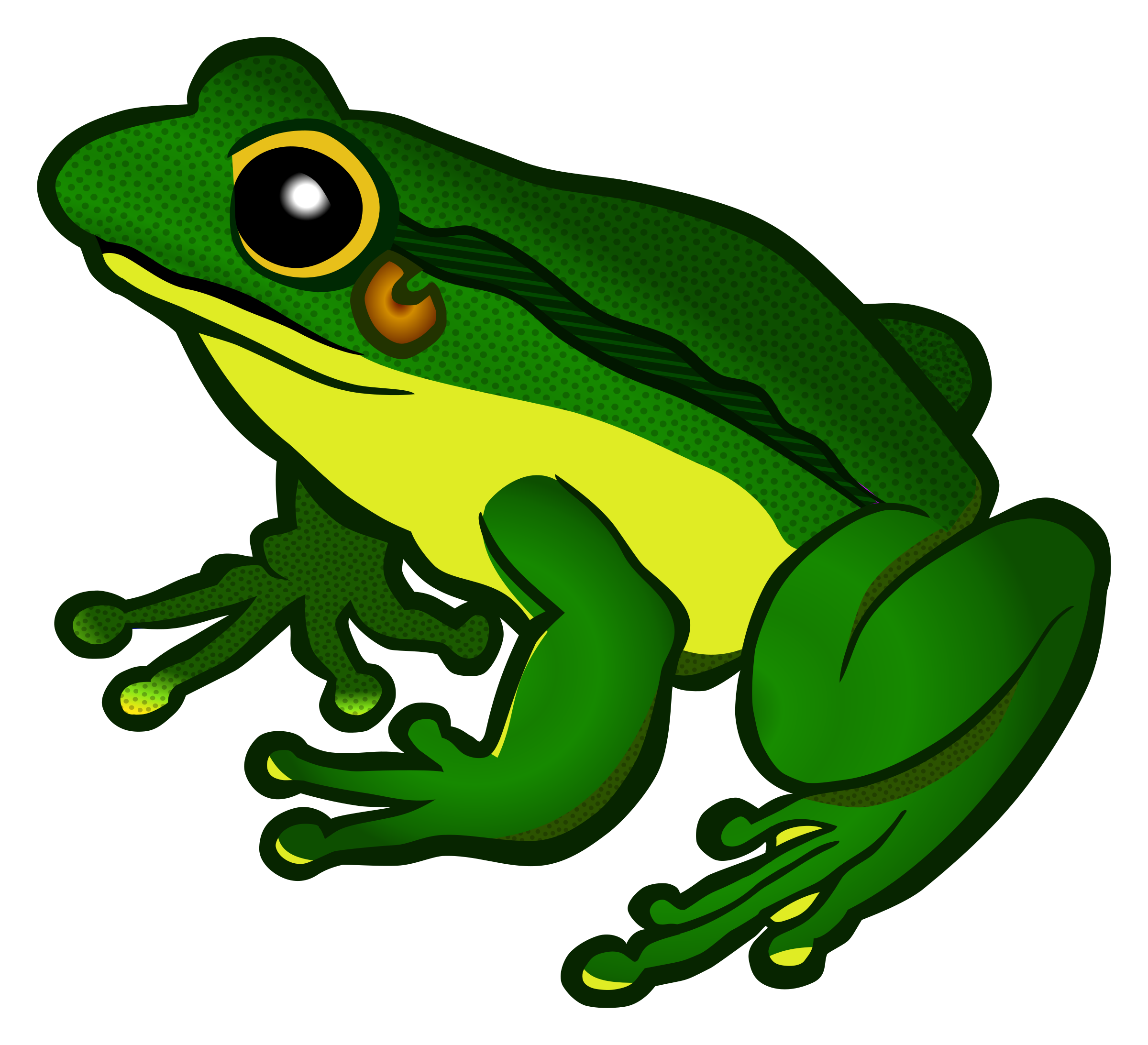 2400x2185 > Frog Wallpapers