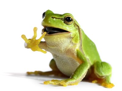 High Resolution Wallpaper | Frog 400x300 px