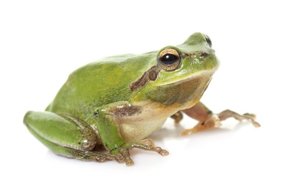 Frog Pics, Animal Collection