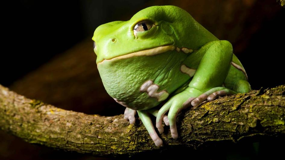 Frog Backgrounds on Wallpapers Vista