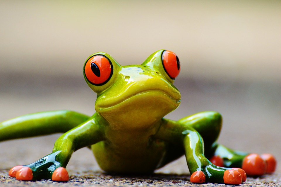 Amazing Frog Pictures & Backgrounds