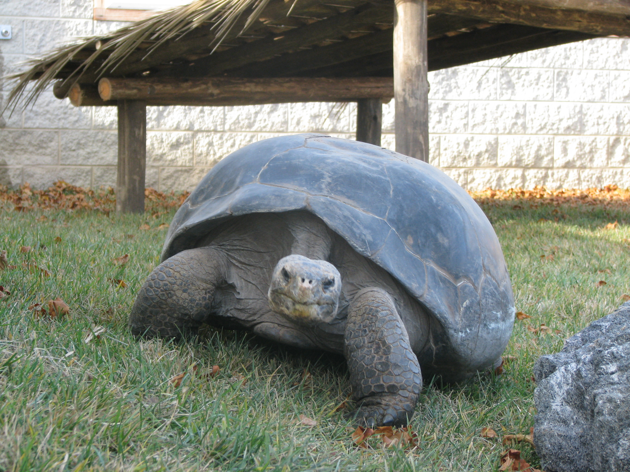 HD Quality Wallpaper | Collection: Animal, 2048x1536 Galápagos Tortoise