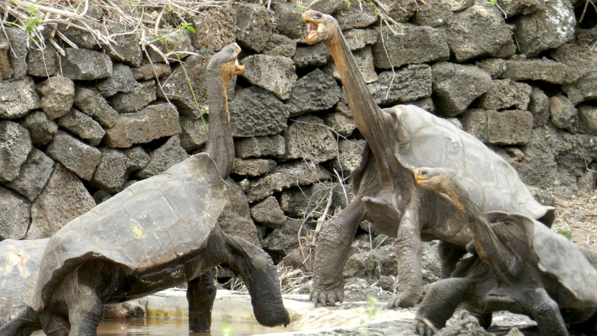 High Resolution Wallpaper | Galápagos Tortoise 2048x1152 px