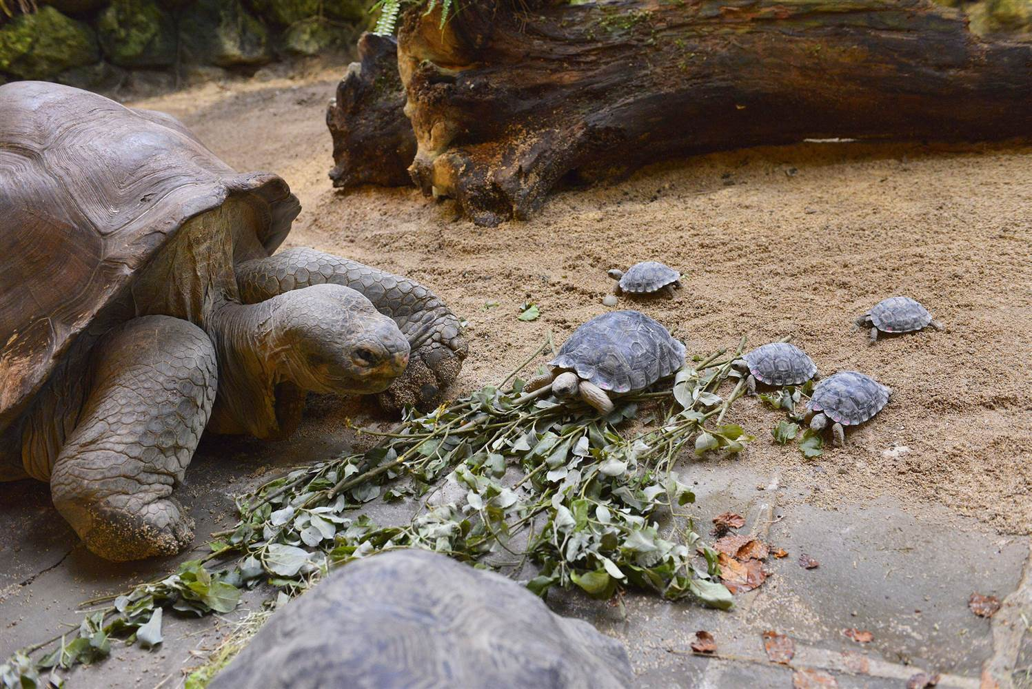 Images of Galápagos Tortoise | 1497x1000