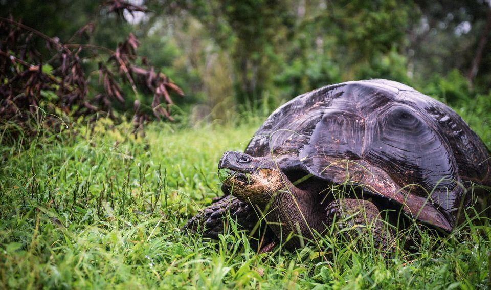 960x567 > Galápagos Tortoise Wallpapers