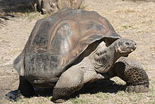 Galápagos Tortoise High Quality Background on Wallpapers Vista