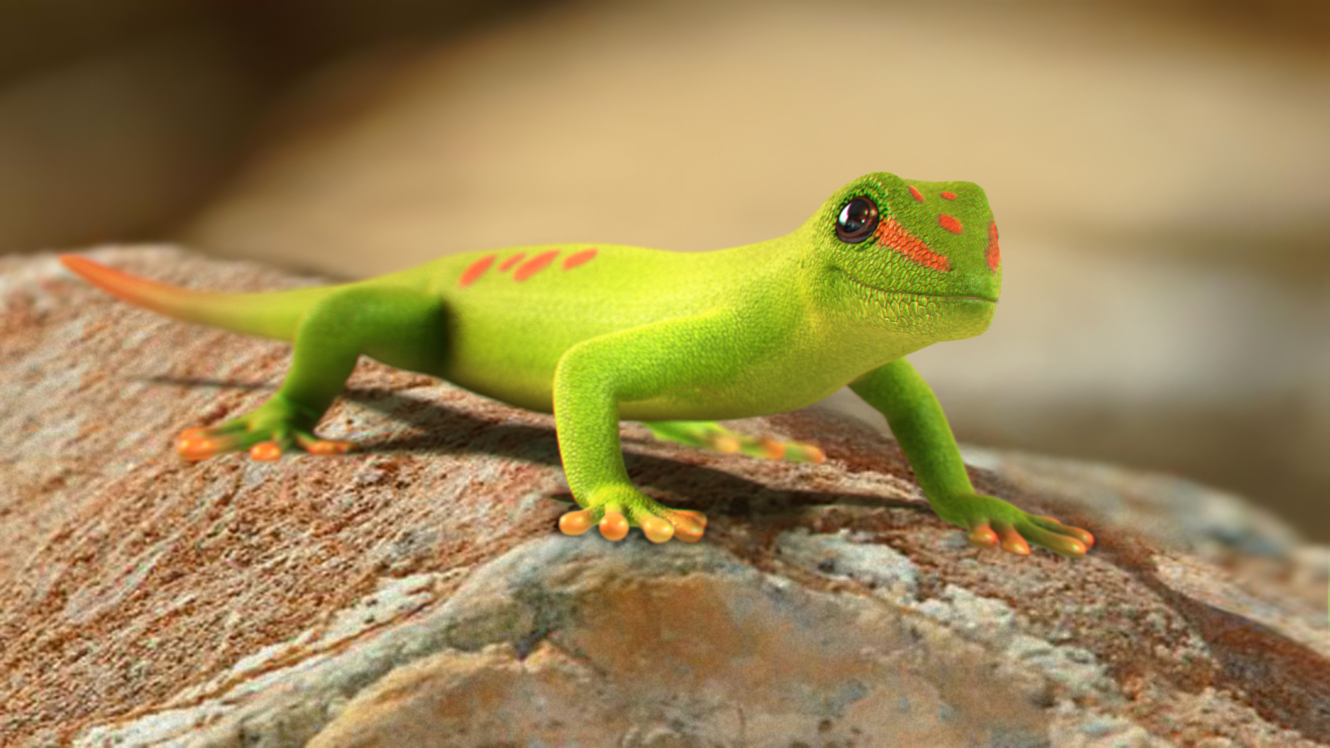 Amazing Gecko Pictures & Backgrounds