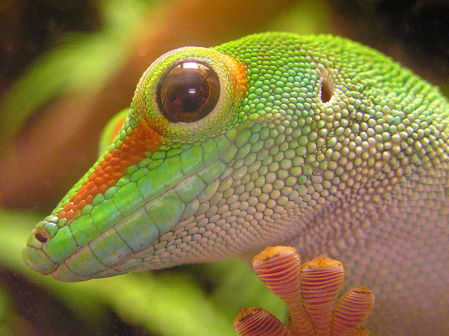 Gecko Backgrounds on Wallpapers Vista