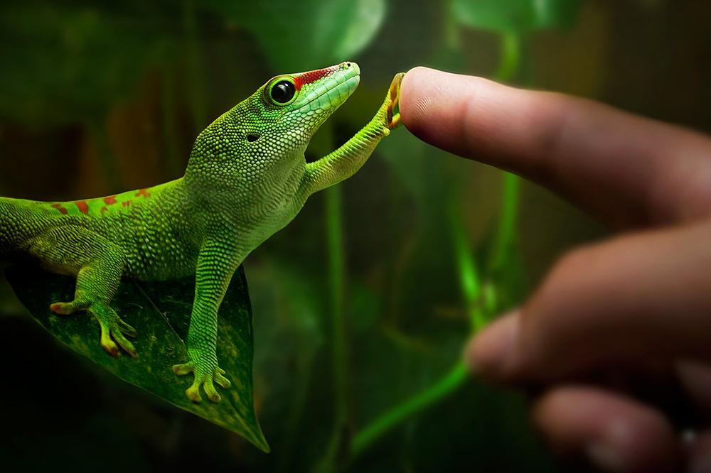 Nice Images Collection: Gecko Desktop Wallpapers