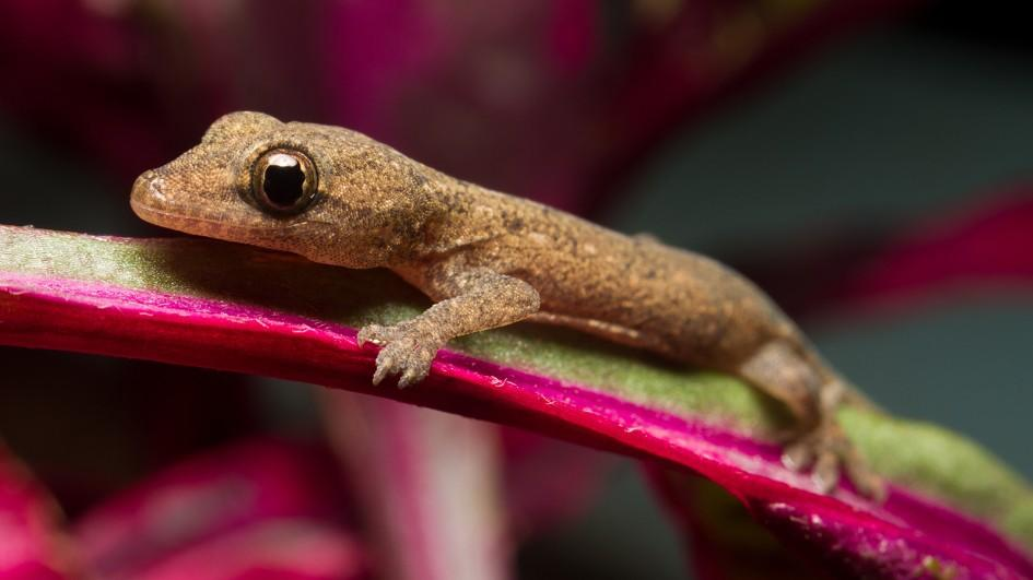 Images of Gecko | 945x531