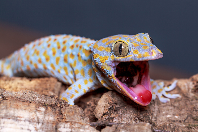 Images of Gecko | 640x427
