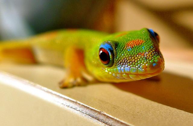 640x418 > Gecko Wallpapers
