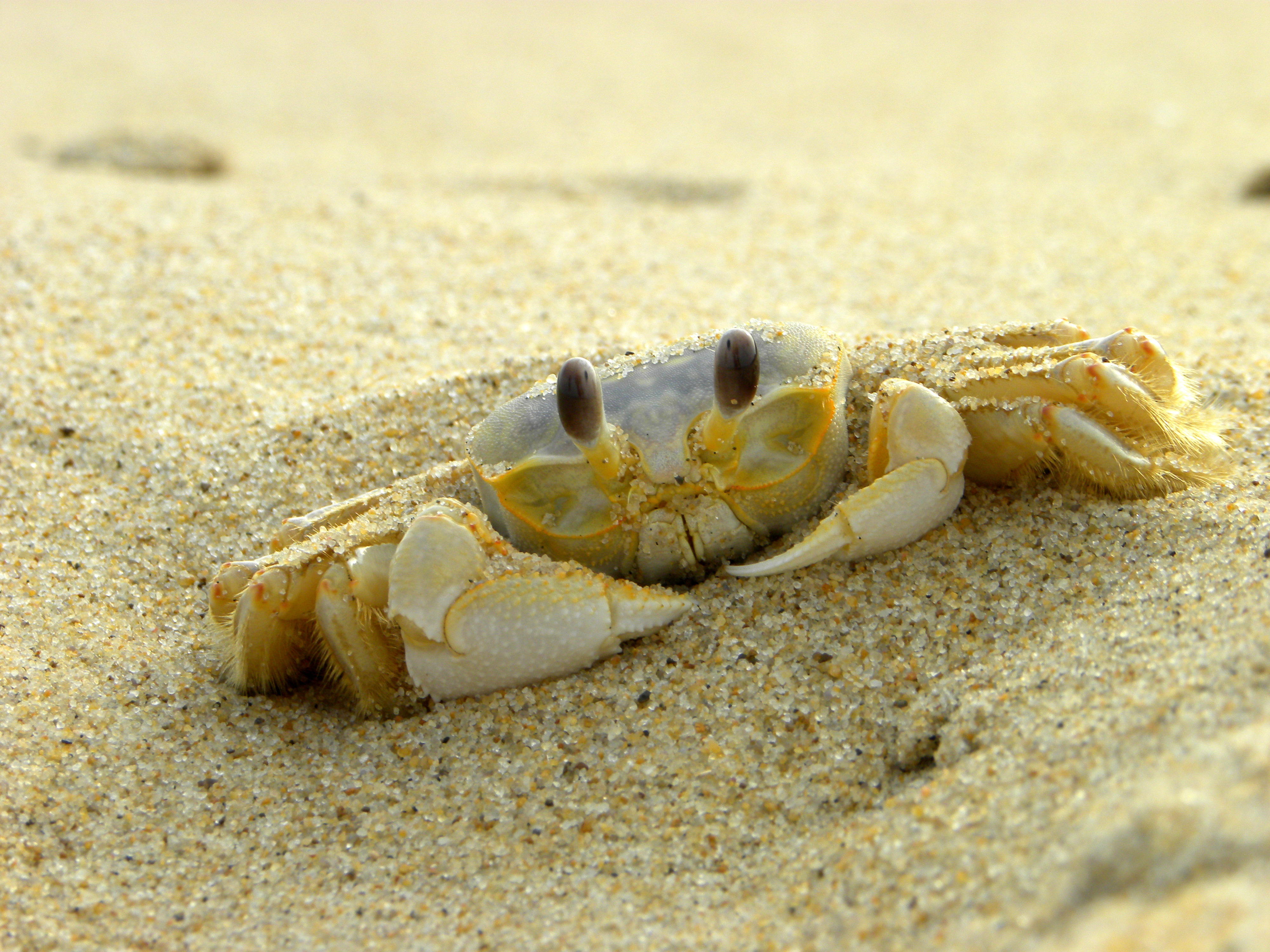 HQ Ghost Crab Wallpapers | File 5325.63Kb