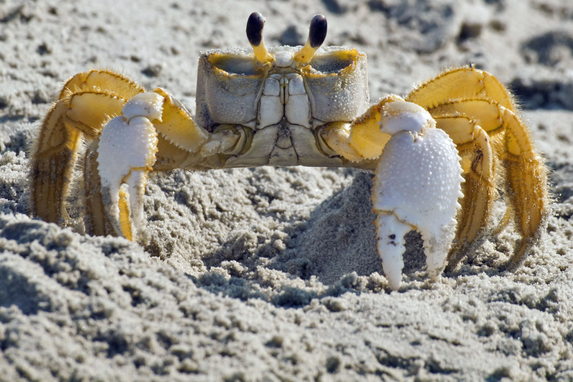 1120x748 > Ghost Crab Wallpapers
