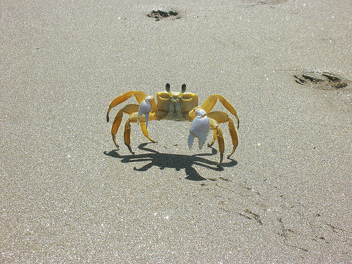 Ghost Crab Backgrounds on Wallpapers Vista