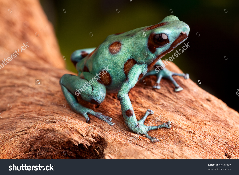 Golden Poison Frog Backgrounds on Wallpapers Vista