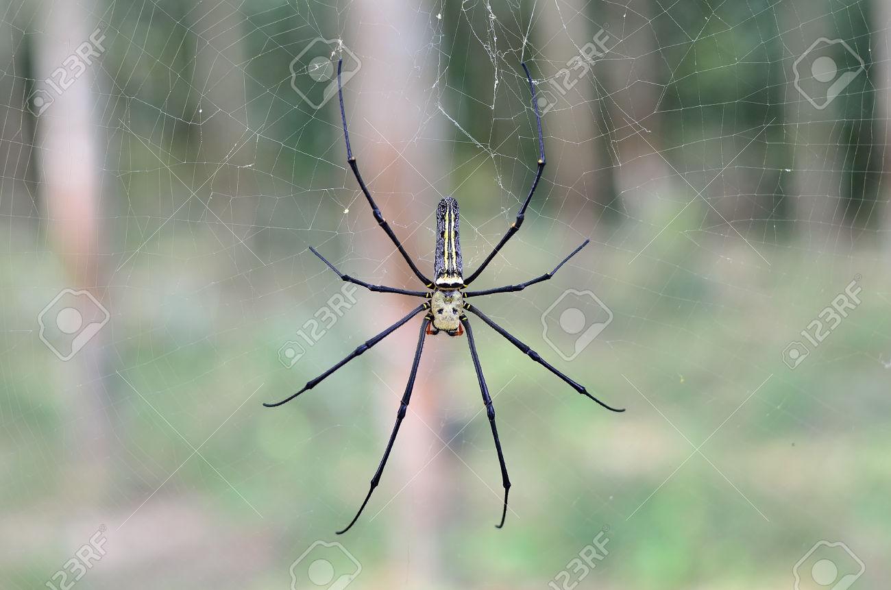 HQ Golden Silk Orb-weaver Spider Wallpapers   File 194.69Kb