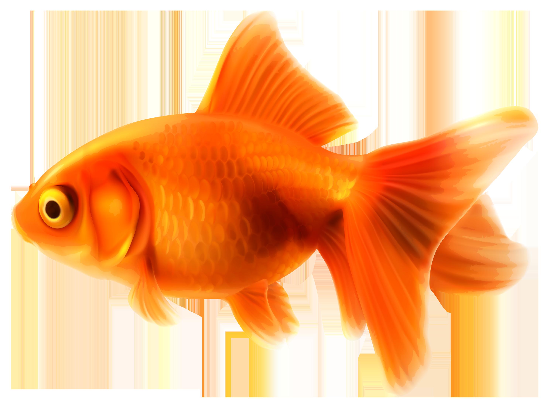 Goldfish Pics, Animal Collection