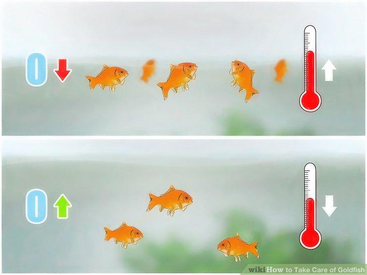 Amazing Goldfish Pictures & Backgrounds