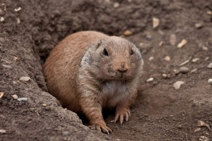 Nice Images Collection: Gopher Desktop Wallpapers