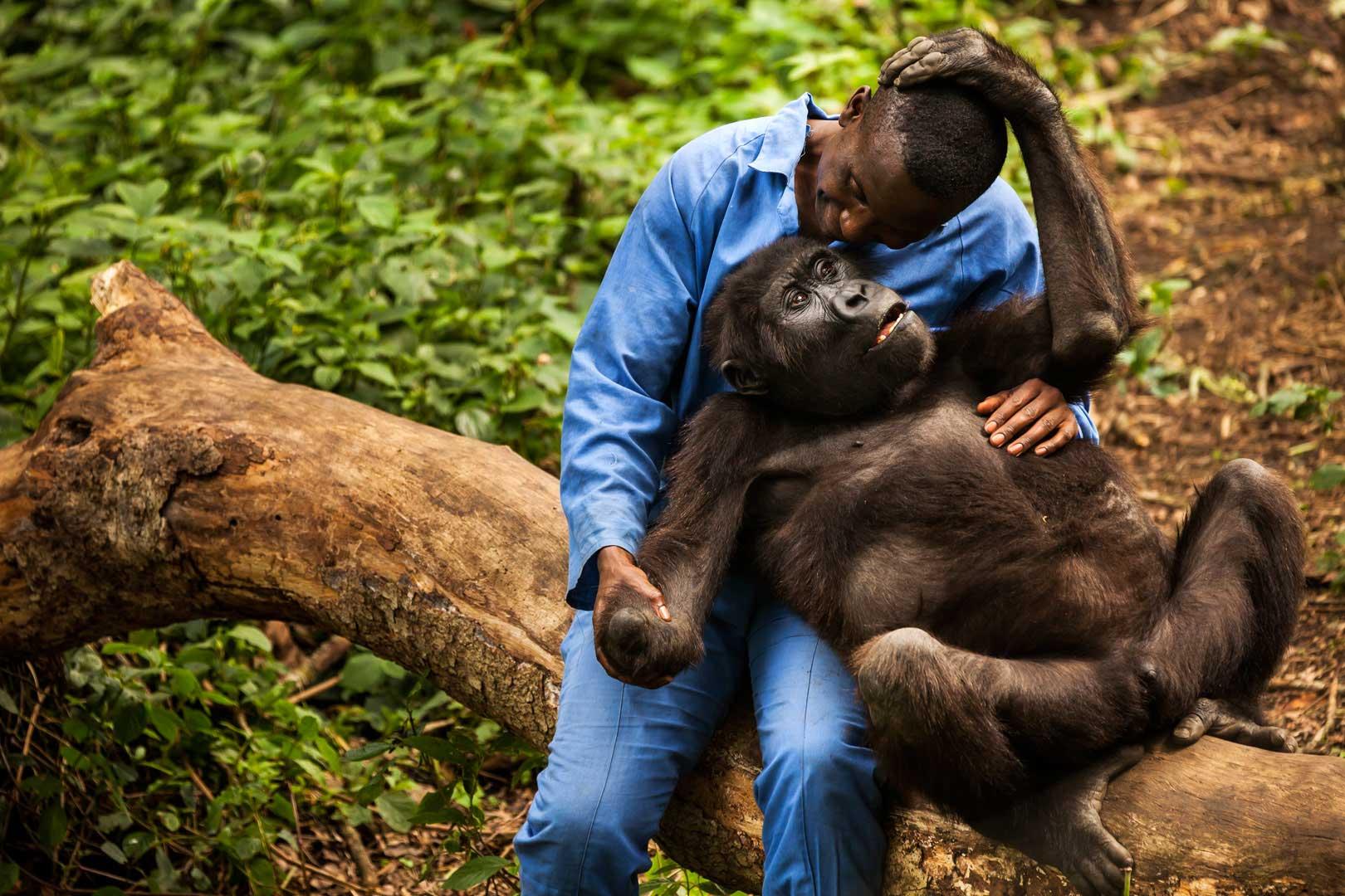 Images of Gorilla   1620x1080