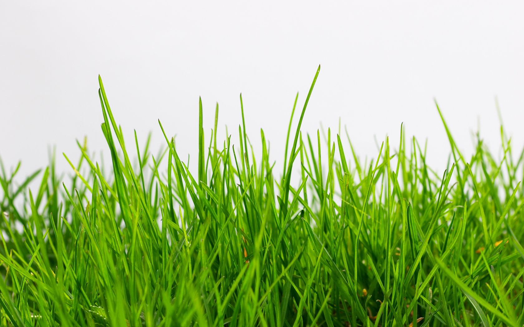 HQ Grass Wallpapers | File 341.18Kb
