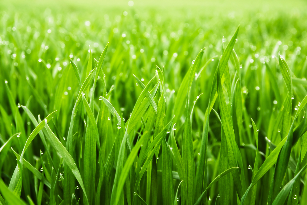 Grass High Quality Background on Wallpapers Vista