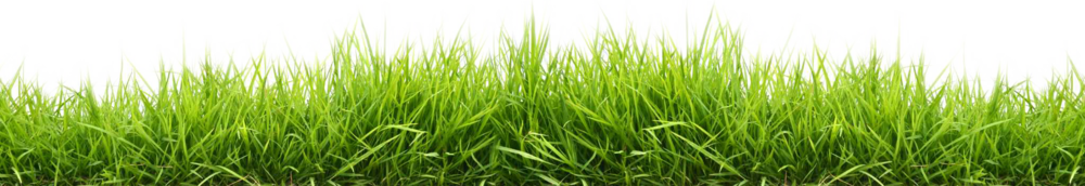 HQ Grass Wallpapers | File 351.17Kb