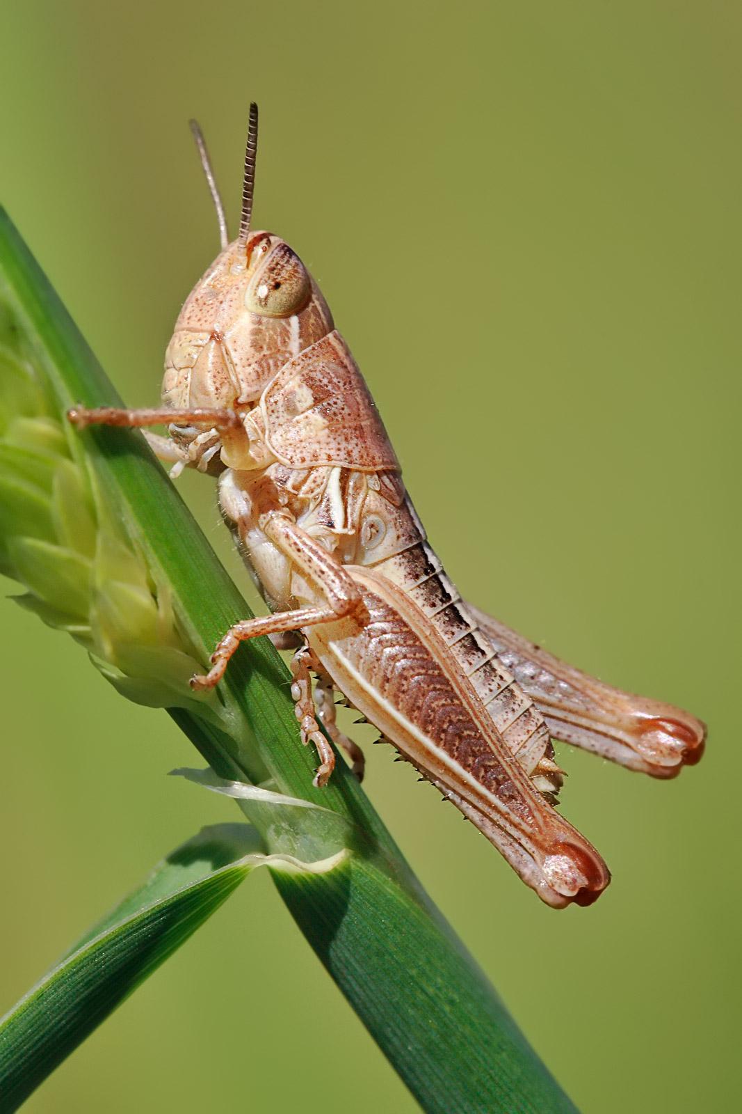 1067x1600 > Grasshopper Wallpapers