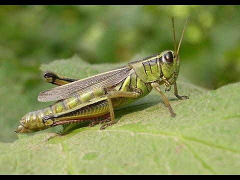 480x360 > Grasshopper Wallpapers