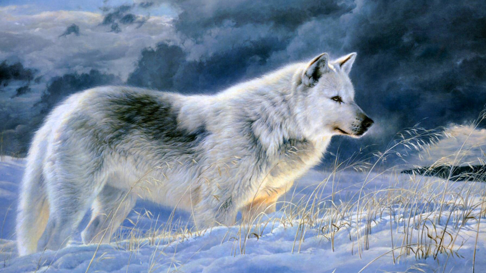 Gray Wolf Pics, Animal Collection