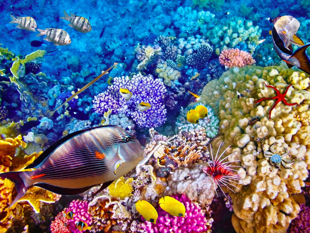 Nice Images Collection: Great Barrier Reef Desktop Wallpapers