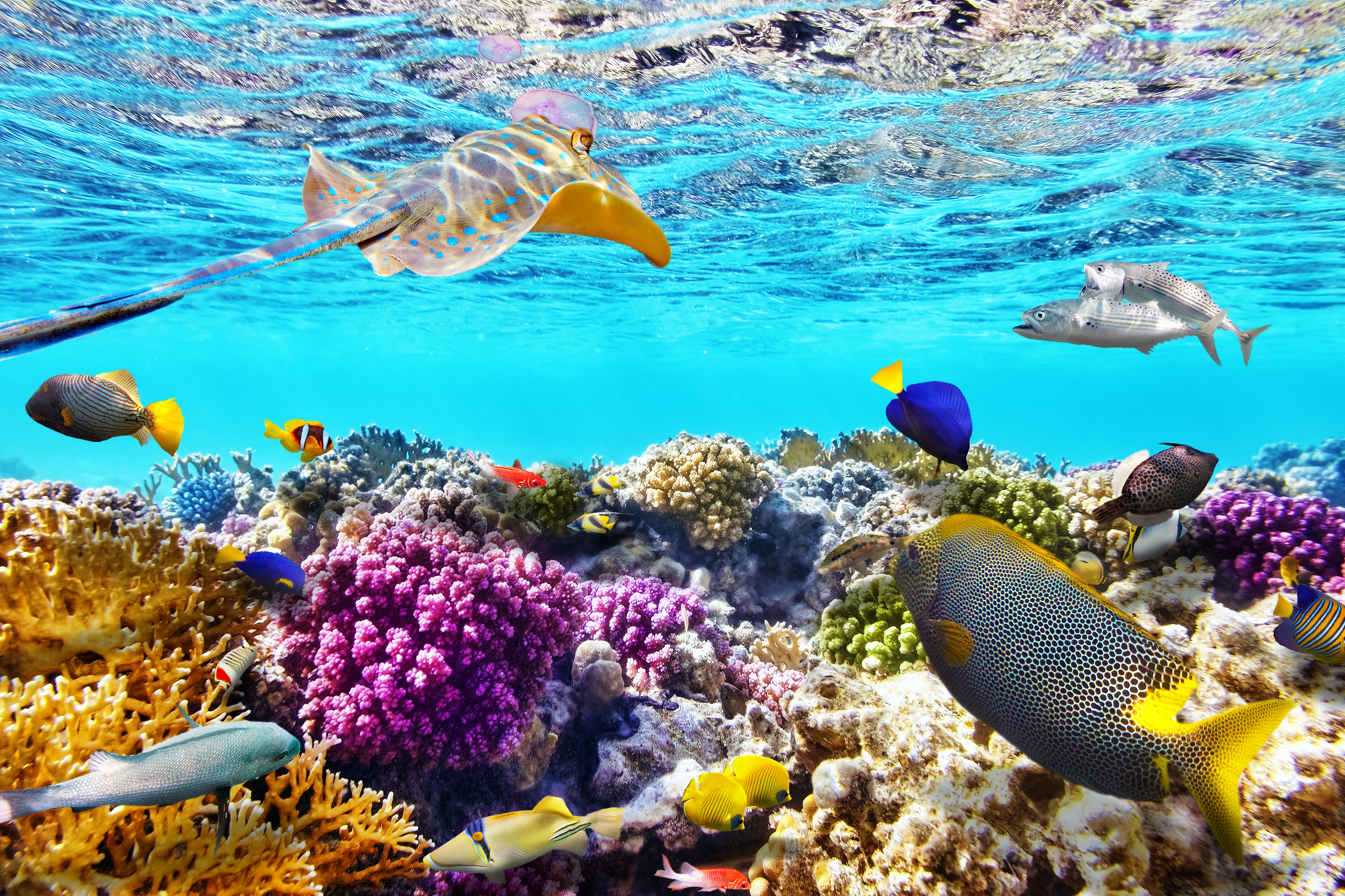 Great Barrier Reef Pics, Earth Collection