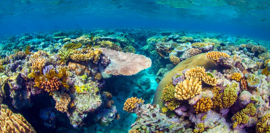 Great Barrier Reef Backgrounds on Wallpapers Vista