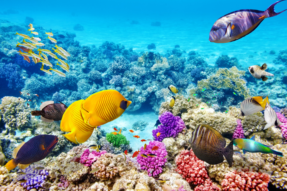 Amazing Great Barrier Reef Pictures & Backgrounds