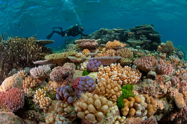 High Resolution Wallpaper | Great Barrier Reef 615x409 px