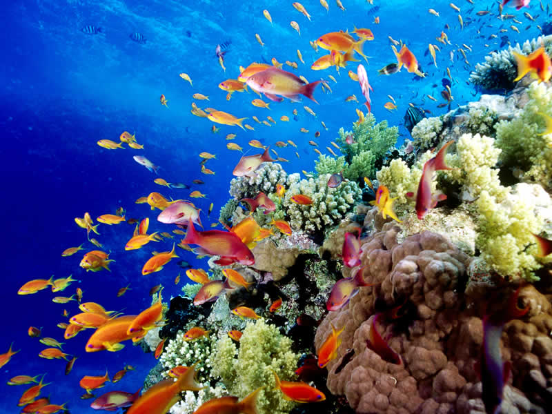 800x600 > Great Barrier Reef Wallpapers