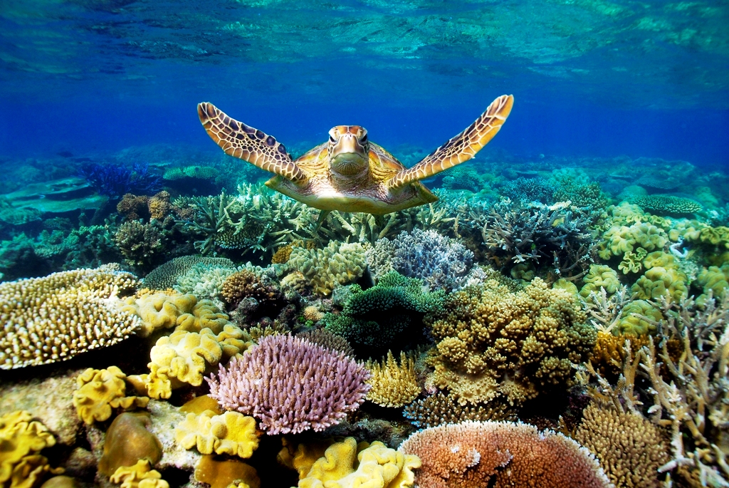 HD Quality Wallpaper | Collection: Earth, 1024x685 Great Barrier Reef