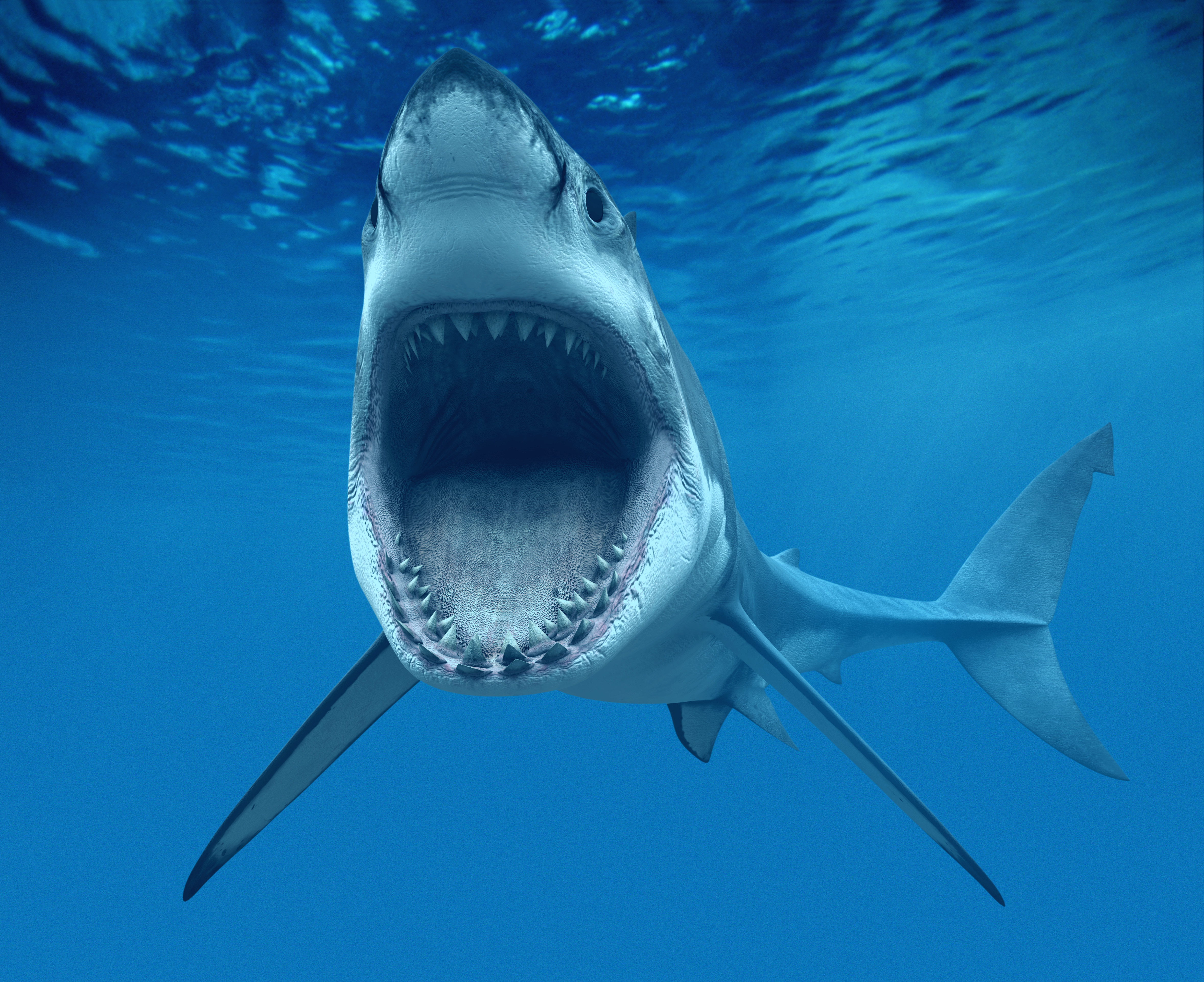 Nice Images Collection: Great White Shark Desktop Wallpapers