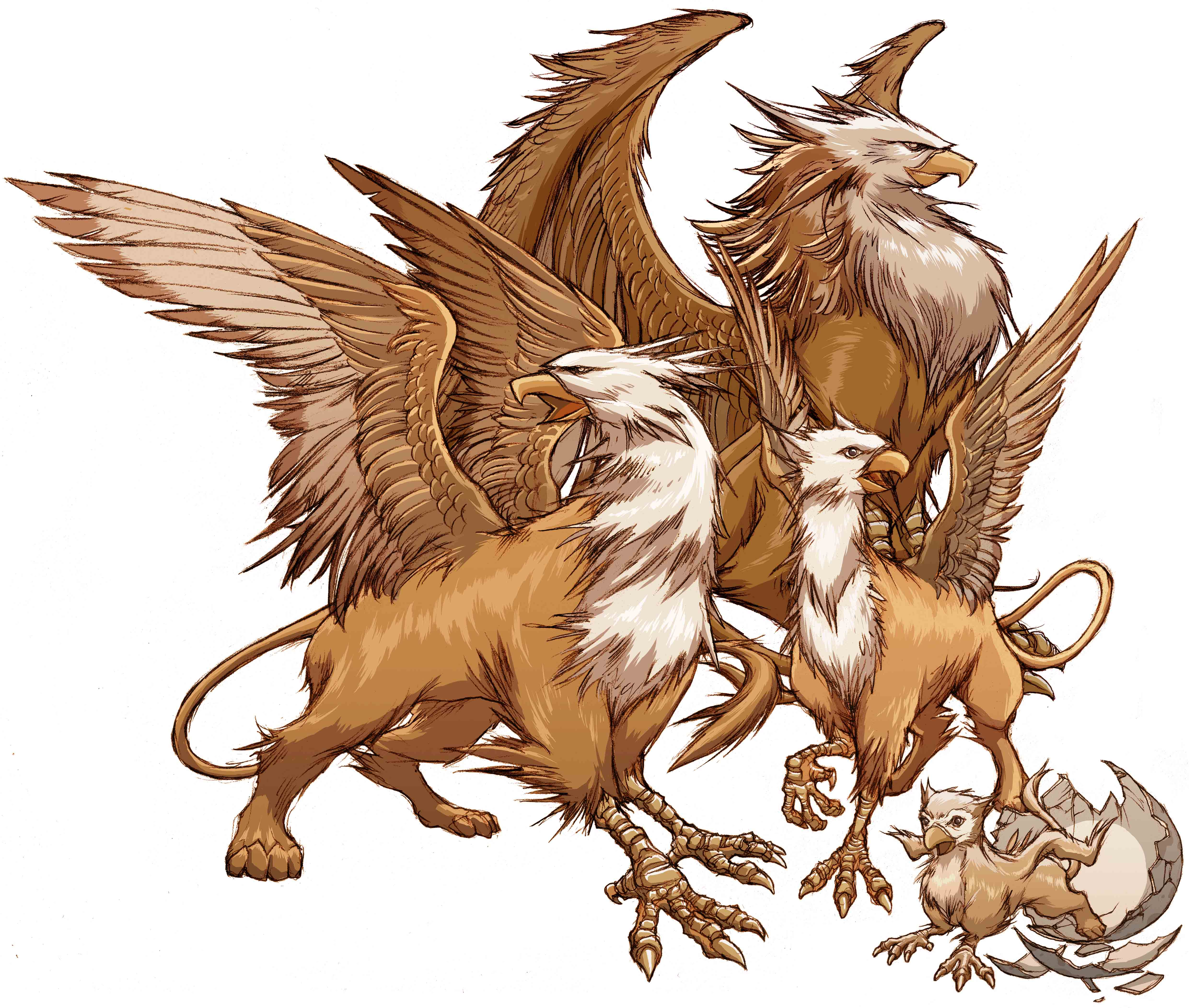 Amazing Griffin Pictures & Backgrounds