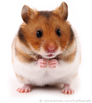 Hamster Backgrounds on Wallpapers Vista