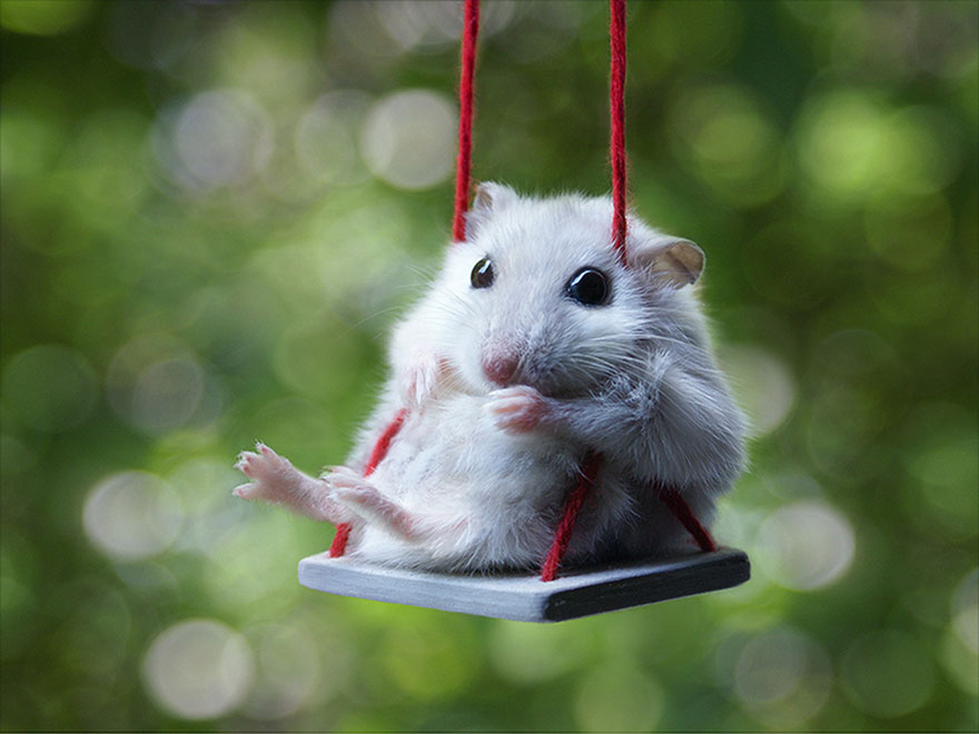 HD Quality Wallpaper   Collection: Animal, 880x660 Hamster