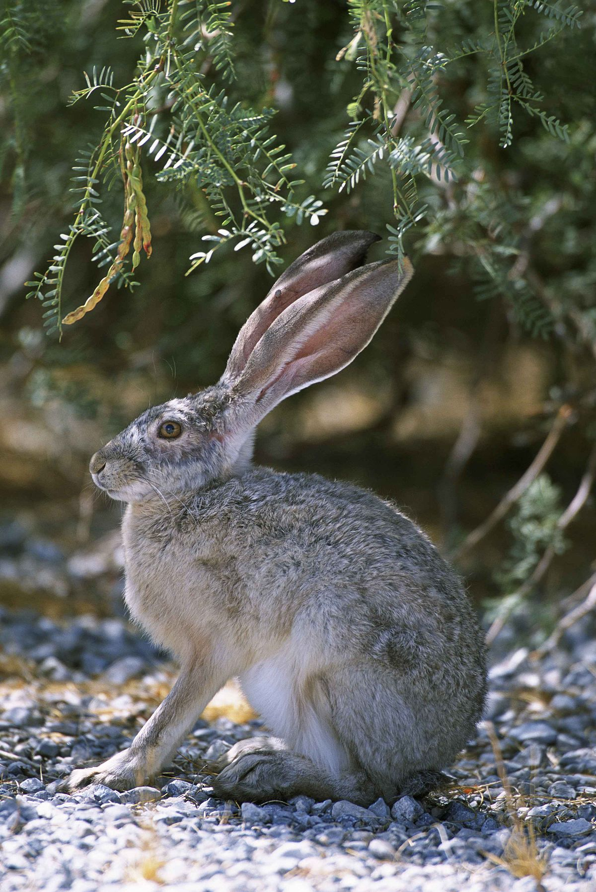 Hare Backgrounds, Compatible - PC, Mobile, Gadgets| 1200x1795 px