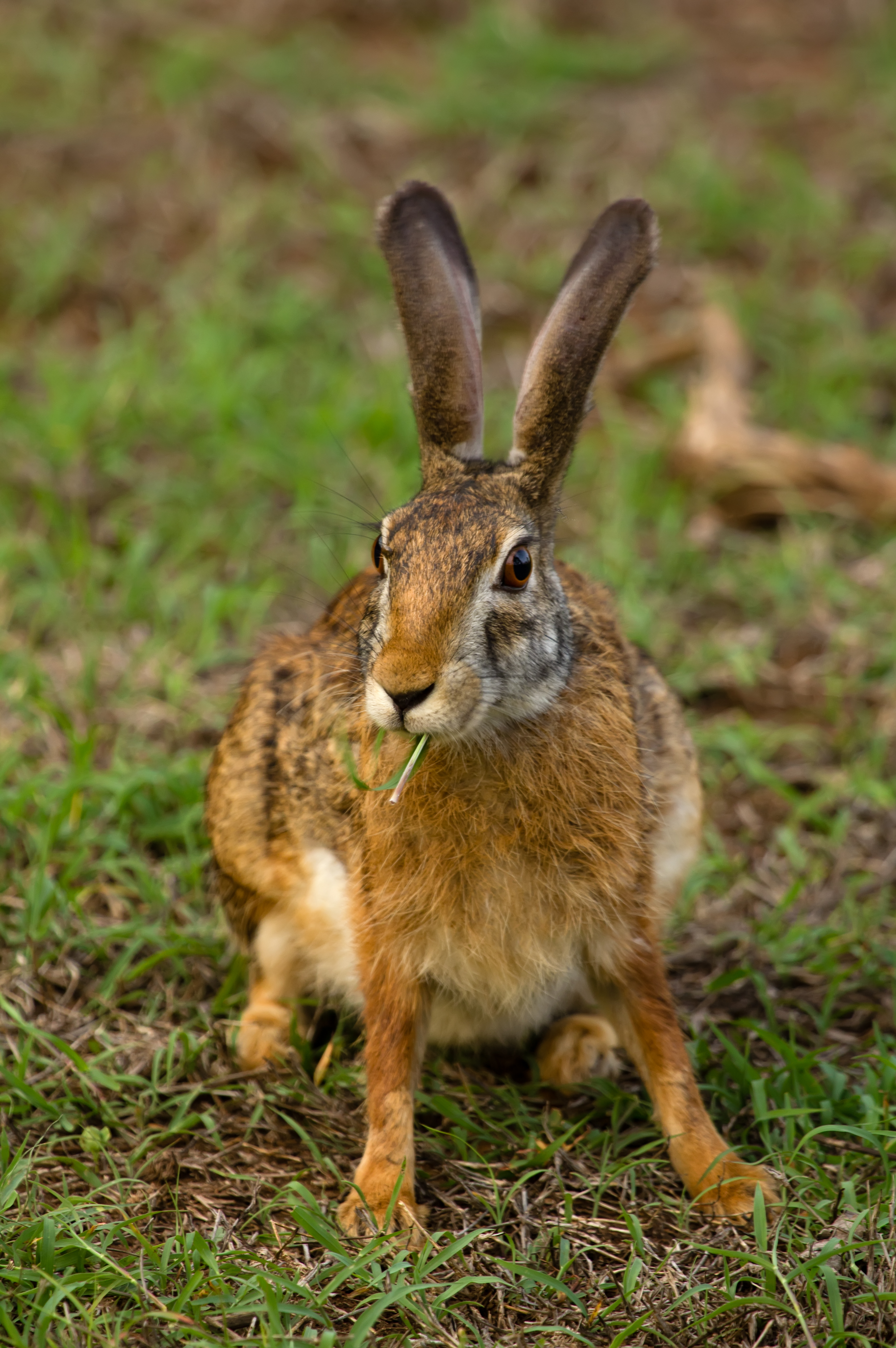 Nice Images Collection: Hare Desktop Wallpapers
