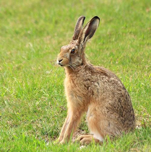 Hare Pics, Animal Collection