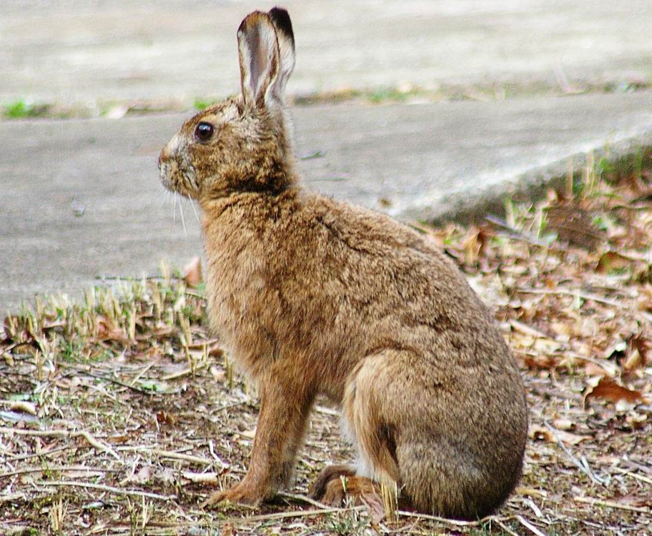 Images of Hare | 912x751