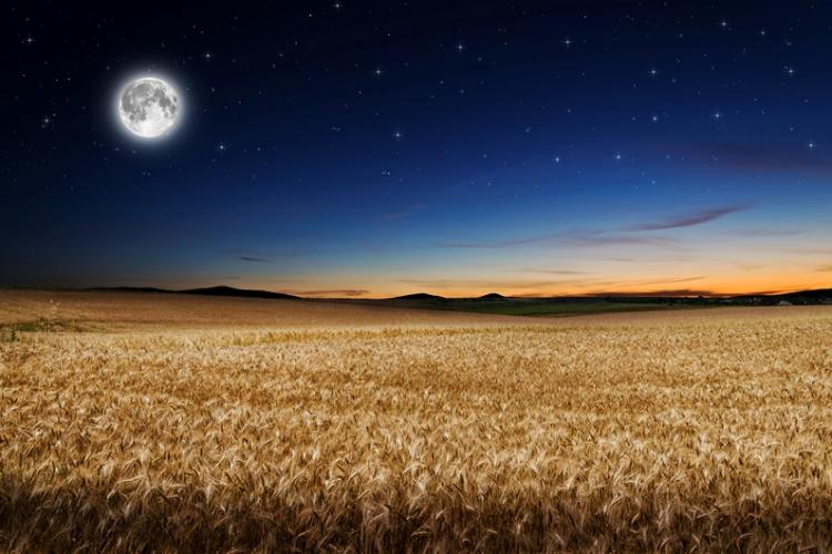 Nice Images Collection: Harvest Moon Desktop Wallpapers