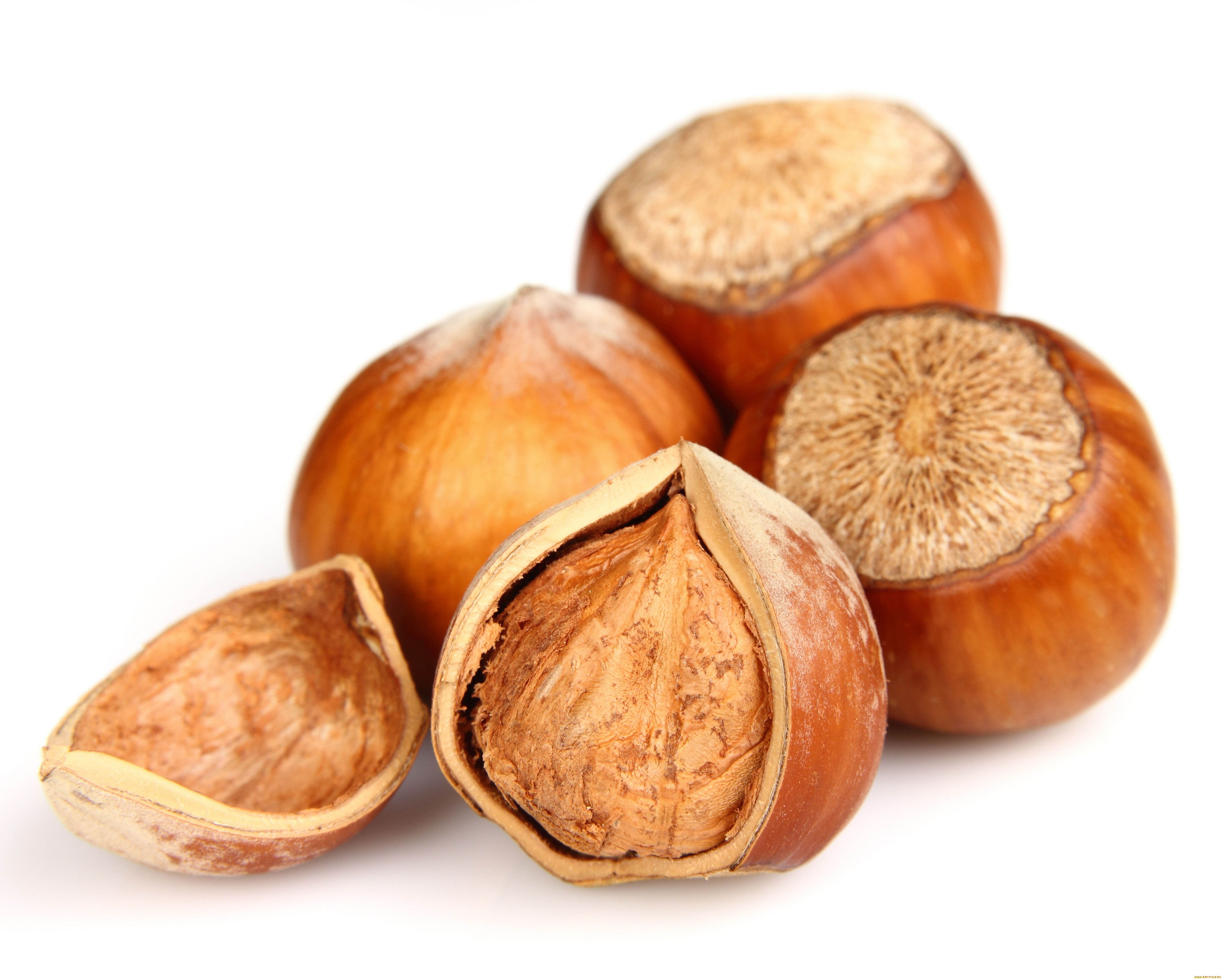 Hazelnut High Quality Background on Wallpapers Vista